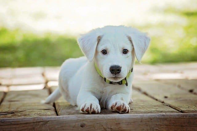 Fintech Tierversicherungen: Boughtbymany als Spezialist