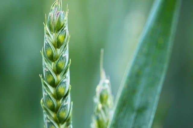 Insurtech Fibur: Altersvorsorge mit ethisch-ökologischen Versicherungen